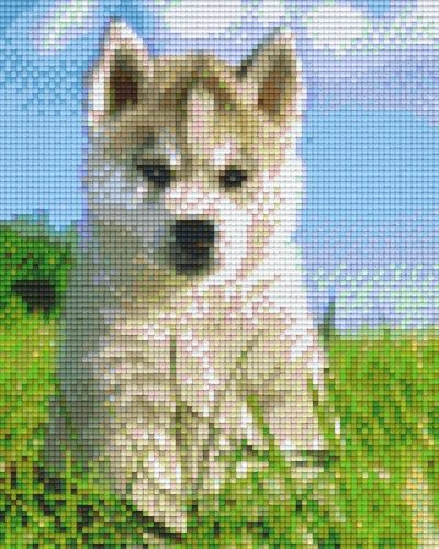 Chiot Husky Animaux Ids Pixelhobby